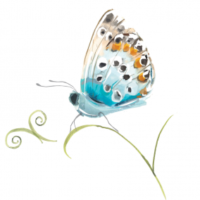 Albourne_Butterfly-284x300