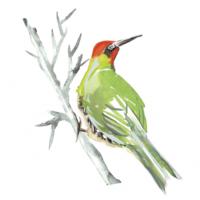 Albourne_Woodpecker-298x300