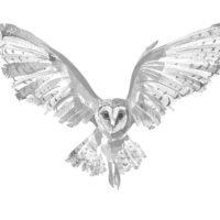 Hi_Res_Owl